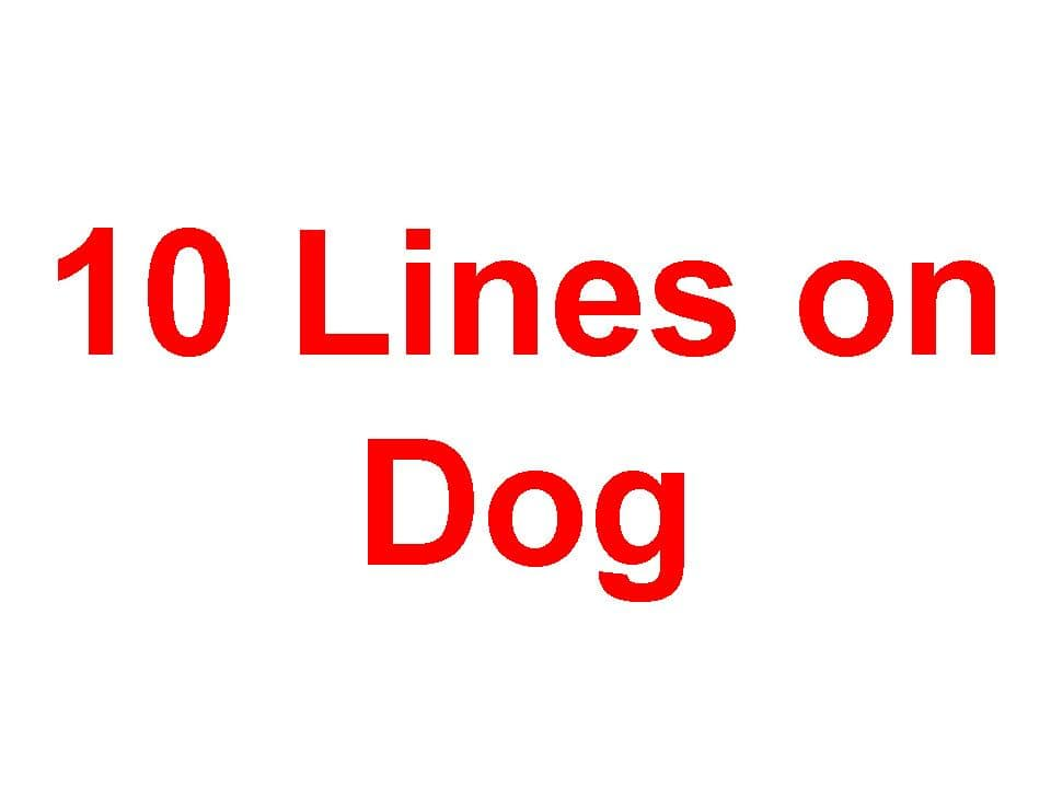 10 Lines on Dog