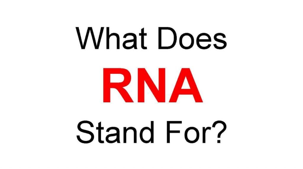 RNA Full Form – What Does RNA Stand For